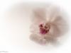 20131102-bloemen_spiegel-20-bewerkt
