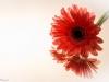 20131102-bloemen_spiegel-28