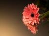 20131102-bloemen_spiegel-29