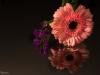 20131102-bloemen_spiegel-57