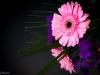 20131104-bloemen_spiegel-114