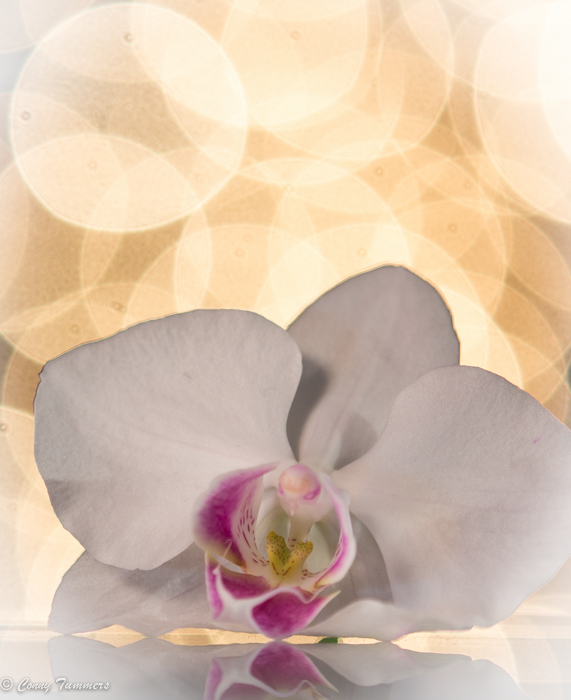 20131102-Orchidee-9