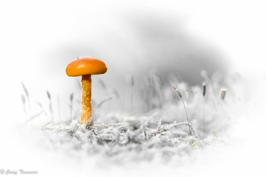 20131109-Veluwe_2013-118