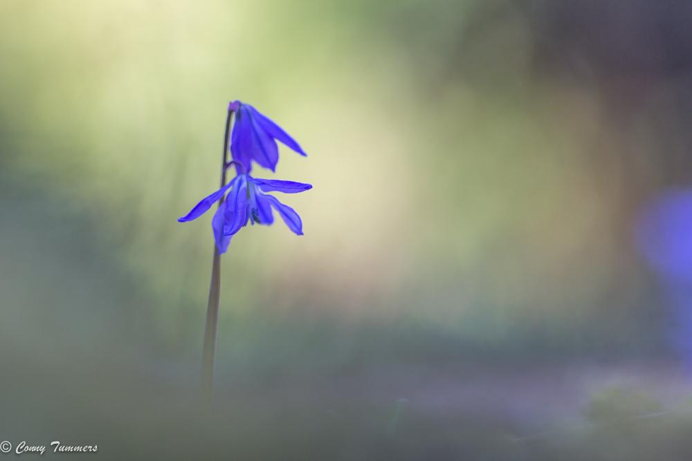 Dezelfde hyacint, maar nu vanaf een heel laag standpunt.